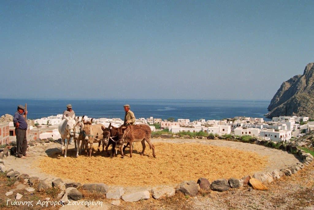 Mediterranean Greel fava